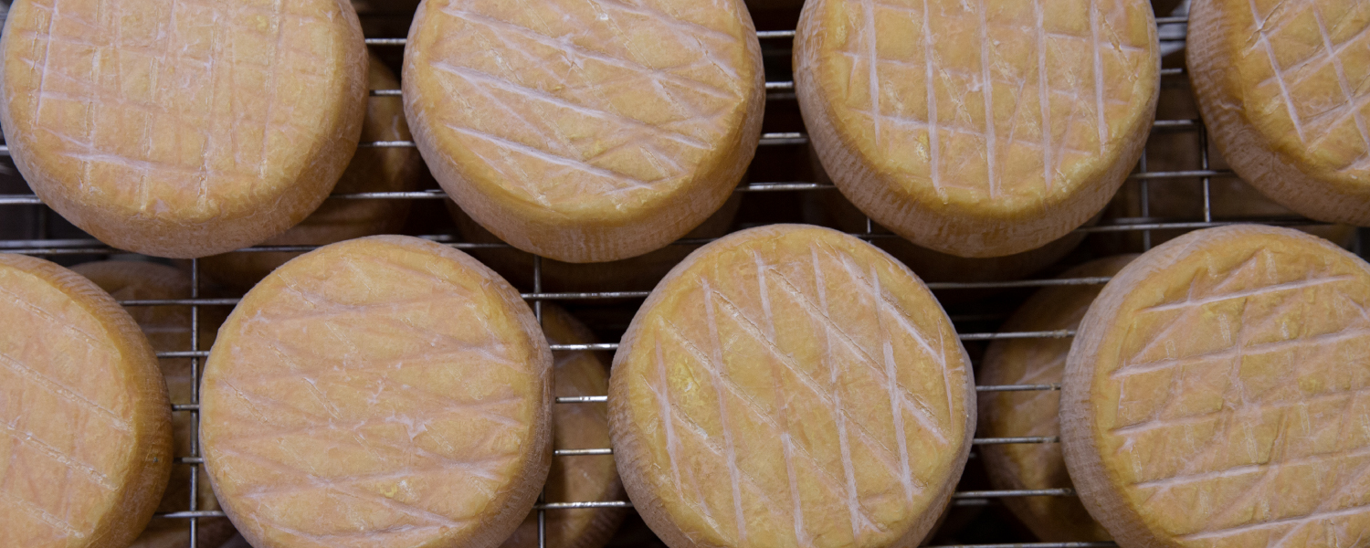 Washed Rind Cheese